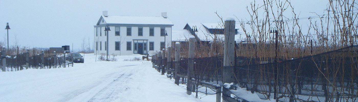 Loyalist history, Niagara, vineyard, historical-preservation